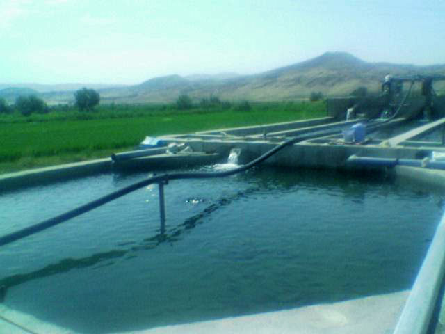 مزرعه پرورش ماهی روستای حصار